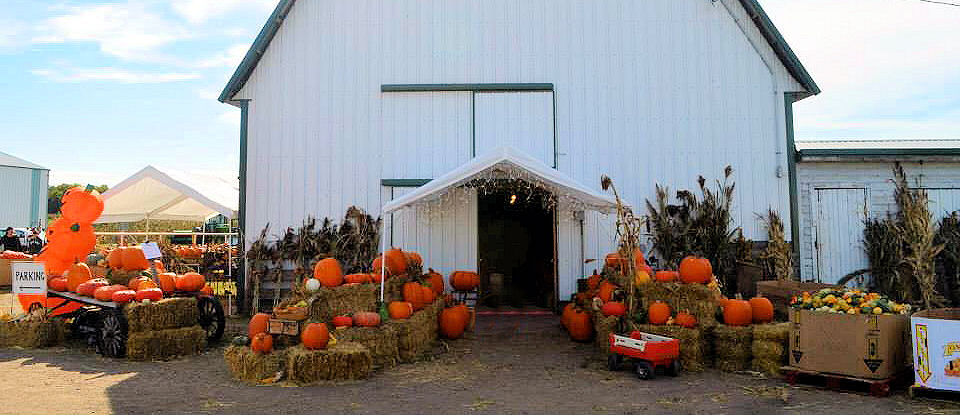 Bring Your Family and Spend a Day at the Farm